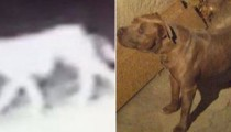 Mystery solved : the mysterious animal spotted in Los Angeles is a dog !