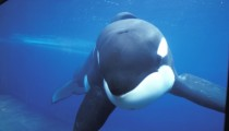 Reasons why you shouldn't visit a Sea World park