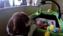 Charlie the beagle strikes again!