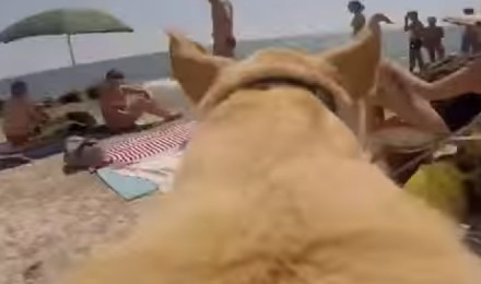 This dog is just crazy about WATER !