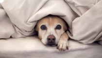 Sleeping with your pet is bad for your sexual life