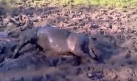 A crazy mud bath