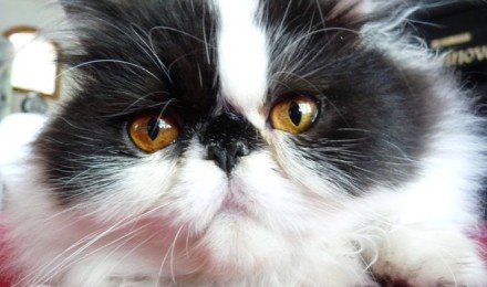 Recognizing cat eye problems and diseases