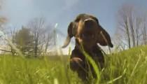 Beware : overload of cute puppies