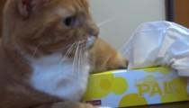 Chai the cat defends the tissue box