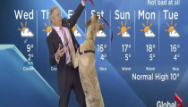 Ripple, the weather dog