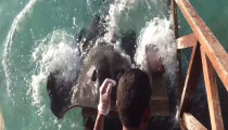 Stingray gets out the water and claims for food!