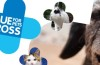 Interview : Blue Cross, helping pets for over 100 years