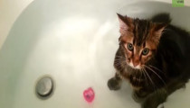 This kitten loves taking bath!