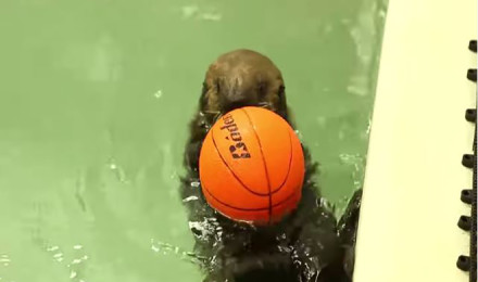 Playdate with a baby otter