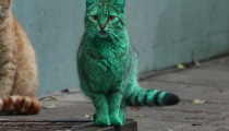 The mysterious Bulgarian green cat