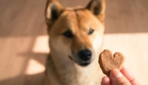 DIY : A yummy chicken and apple dog treat