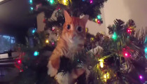 Decorating the christmas tree with cats around the house
