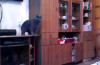 This cat is a better ping pong player than you are