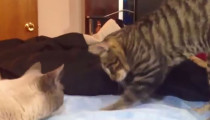 Cats confused by waterbeds compilation