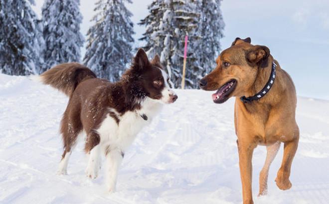 Comment prot ger son chien de la neige - Comment couper les griffes de son chien ...