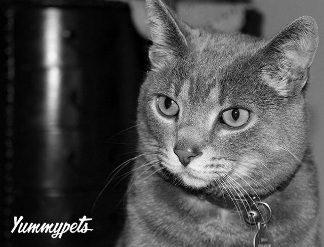 blog_yummypets_5_reasons_you_should_adopt_a_pet_02_09_2015