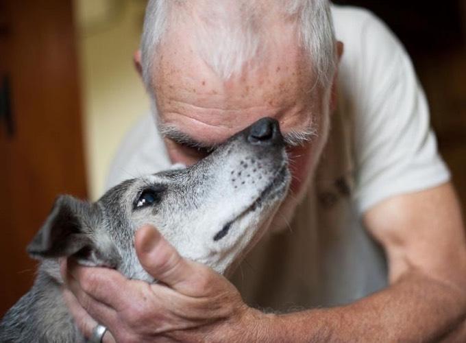 Les chiens dassistance pour les personnes âgées