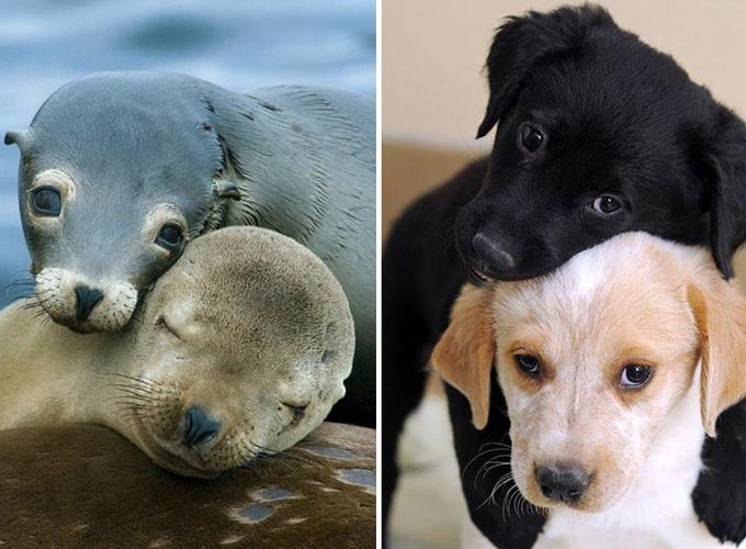 Les chiens et les phoques se ressemblent yummypets for Hotels qui acceptent les chiens
