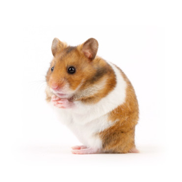 Yummypets Hamster