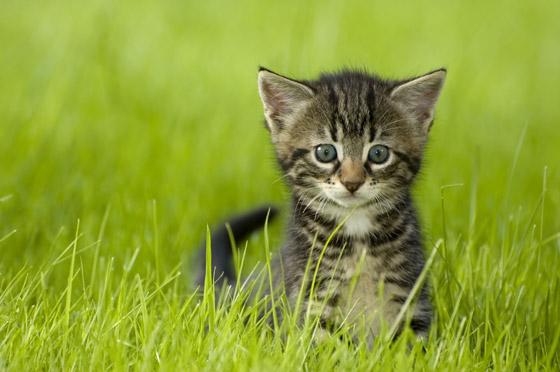 A quel âge adopter un chaton ?
