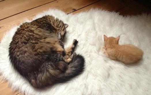 Pour une cohabitation réussie entre chats
