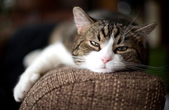 Je pars en vacances. Que faire de mon chat ?