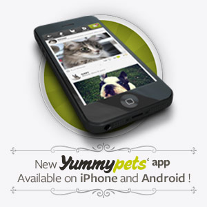 New Yummypets' app, available on iPhone and Android !