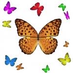 FREE App 1001 Butterflies