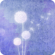 FREE App Becoming a Dandelion Spore.