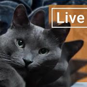 FREE App Cute Lazy Cat Live Wallpaper