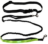 Roysili Tiny Small Pet Hands Free Dog Leash, Premium Dual Handle Running Dog Leash, Lightweight Reflective Bungee Dog Leash for Mini Dogs