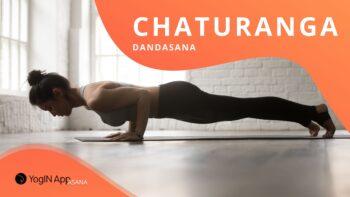 chaturanga dandasana yoginapp blog