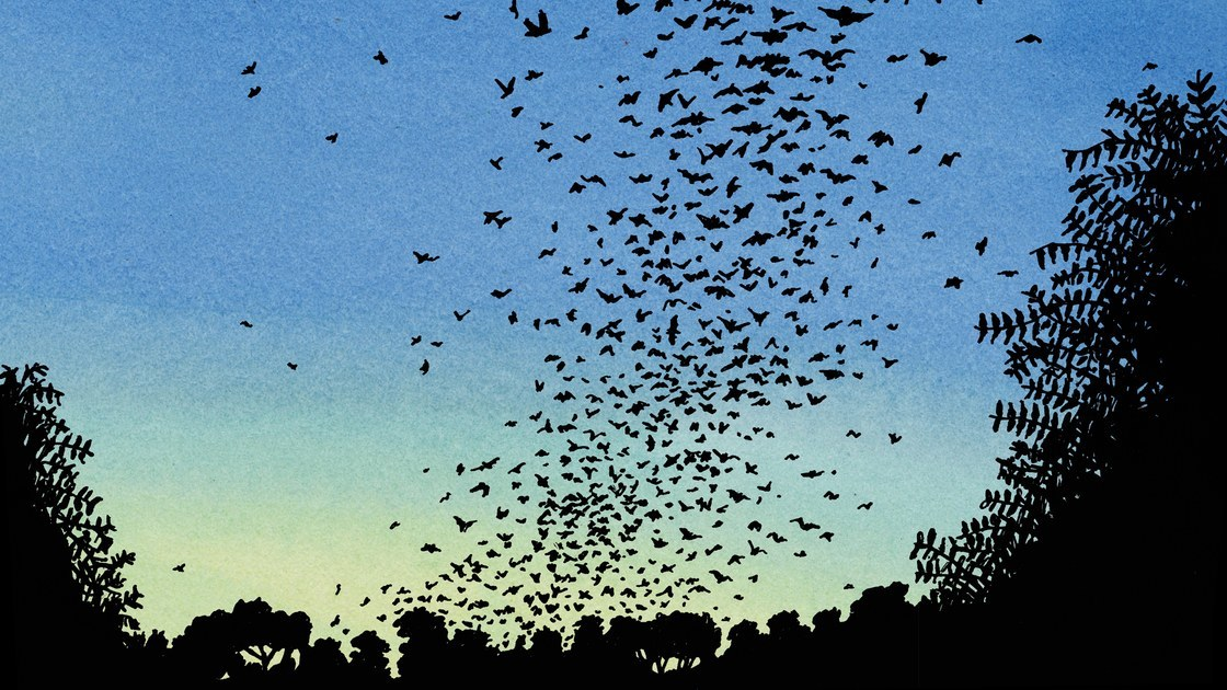 The Changing Climate Inside the World's Largest Bat Colony