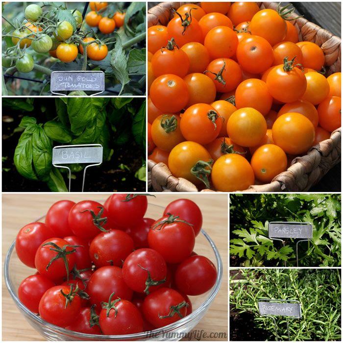 Garden Tomatoes & Herbs