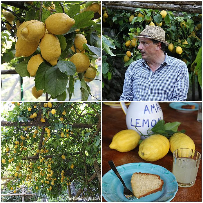 Lemon_orchard.jpg