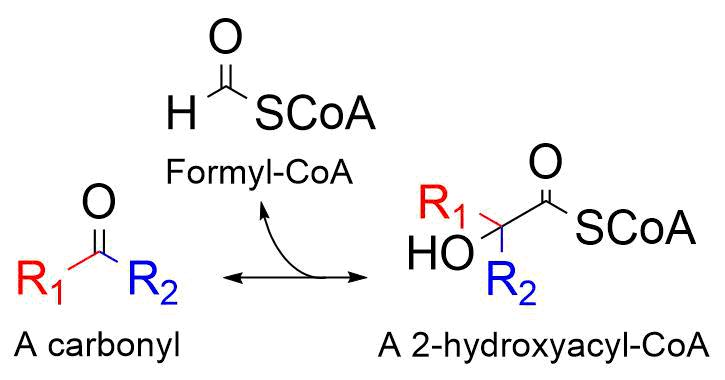 The reaction catalyzed by 2-hydroxyacyl-CoA lyase.