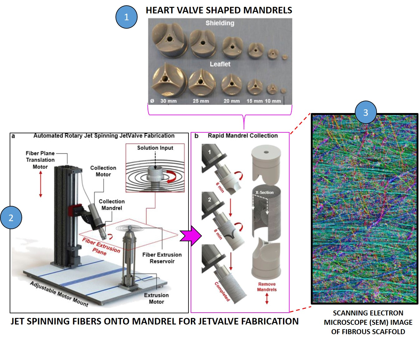 Engineering heart valves for the many