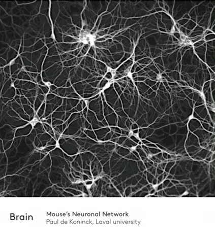 Biological Neural Network