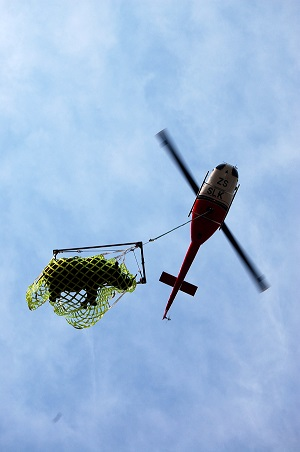 Translocating black rhino - helicoptering a rhino out of a reserve after its capture (Photo credit: Andrew Stringer)