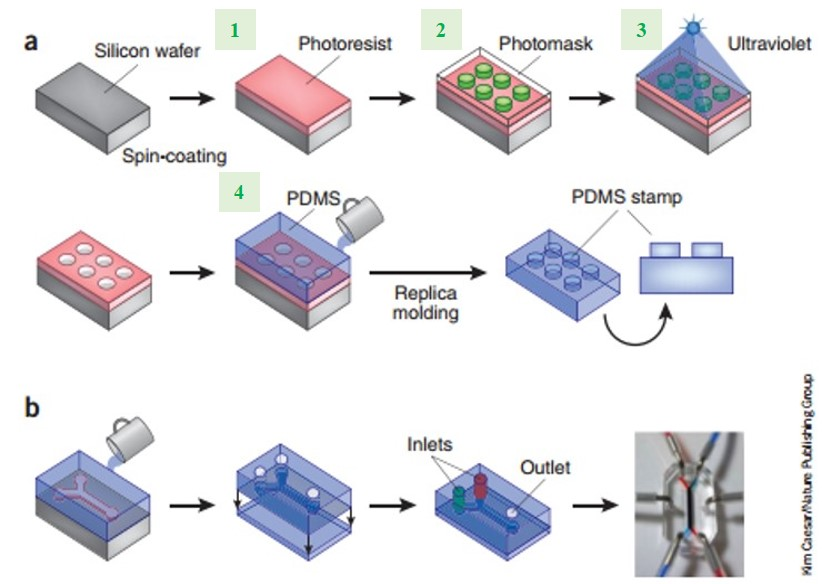 Fabrication methods for microfluidic chips (Figure 1, nature biotech, 2014)