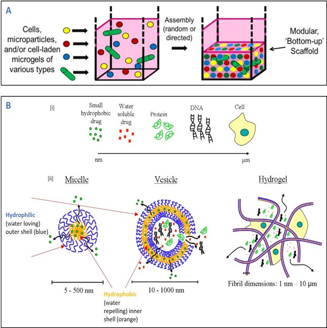 Bottom up tissue engineering and amphiphilic molecules illustrated