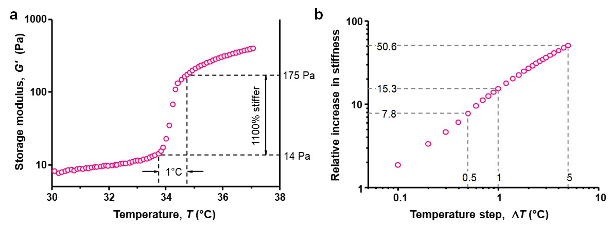 Thermal stiffening of the PIC/PNIPAM composite