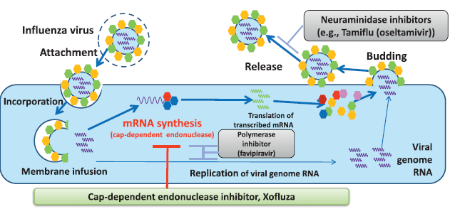 「Cap-Dependent Endonuclease Inhibitor」の画像検索結果