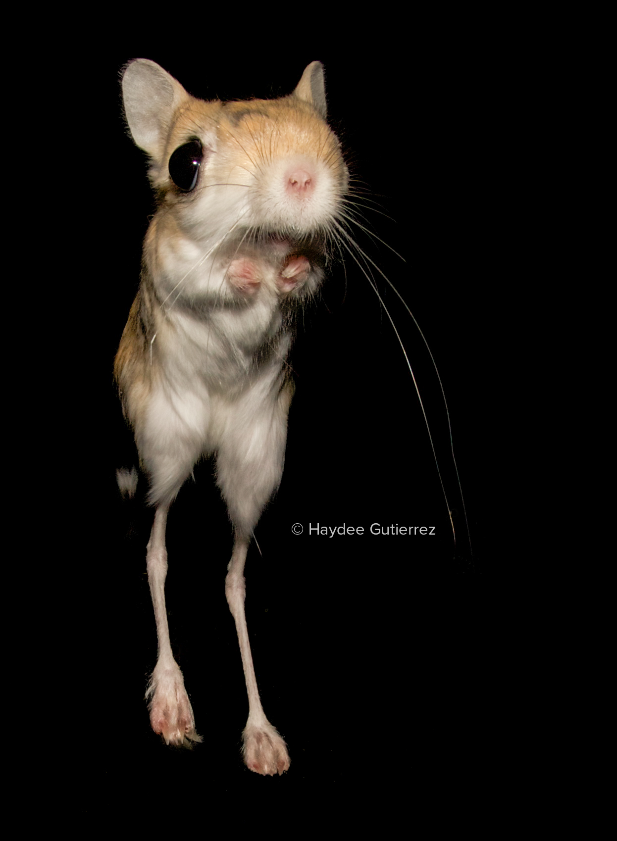 rodent locomotion is more complex than we thought nature research