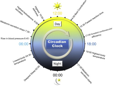 Key physiological changes over the circadian day.