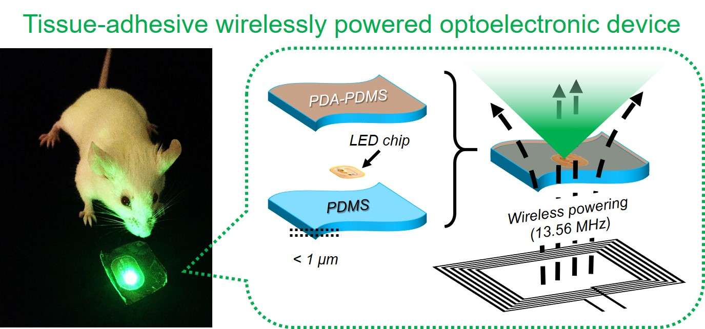 Optoelectronic Devices Tissue Adhesive Patch Delivers Light For Cancer Phototherapy Wirelessly Powered Device Composed Of An Nfc Based Led Chip Sandwiched Between Pda Pdms And Nanosheets