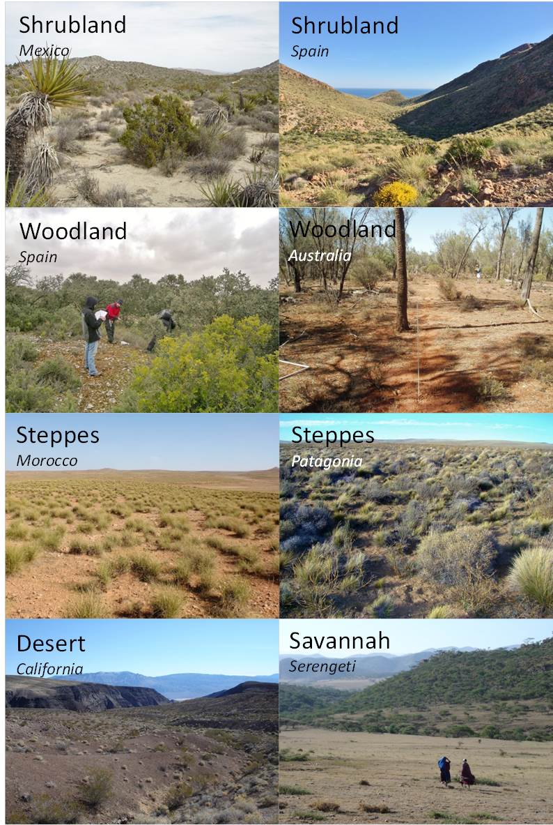 Plant Diversity Maximizes Ecosystem Functioning Nature Research