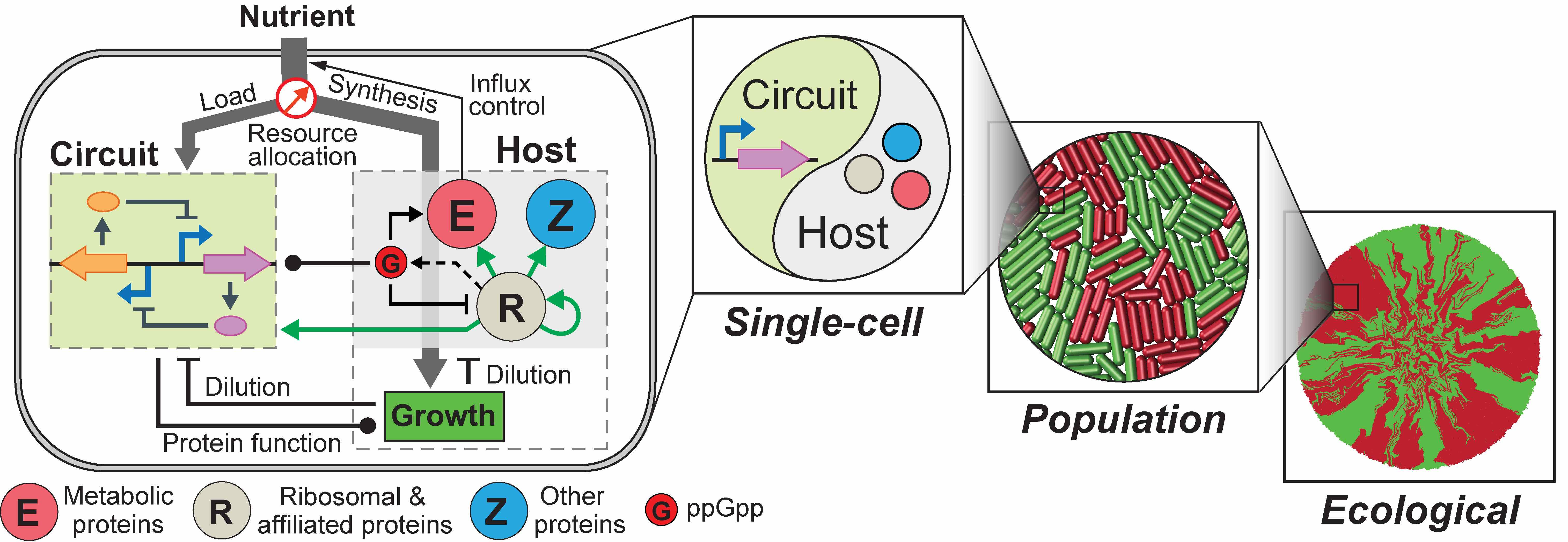Building A Predicative Tool For Synthetic Gene Networks Nature Design Electrical Circuit Similar To Circuits Used In Numerous Electronic Devices Genetic Have Been Created