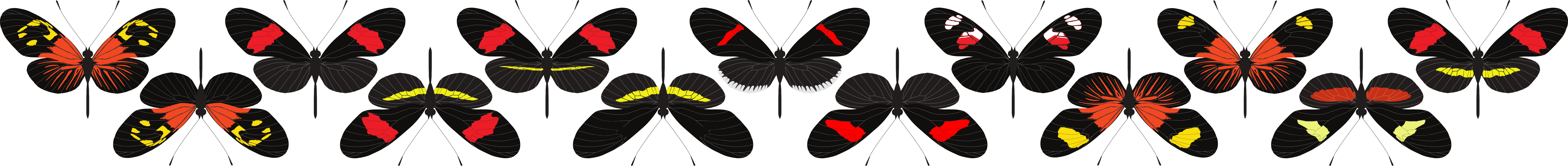 Sample of Heliconius erato diversity explored in the study.